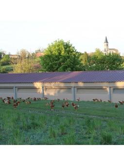 Poulet Fermier du Quercy élevé en plein air à la ferme des hugots